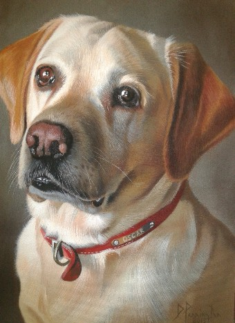 David Pennington Pet Portrait in Oil on Canvas Lancashire penningtonART